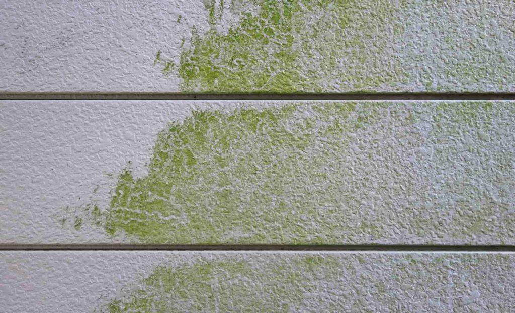 費用も注目】外壁にカビが生える原因と落とし方、予防法を知ろう! | 元プロが教える「外壁塗装」の真実